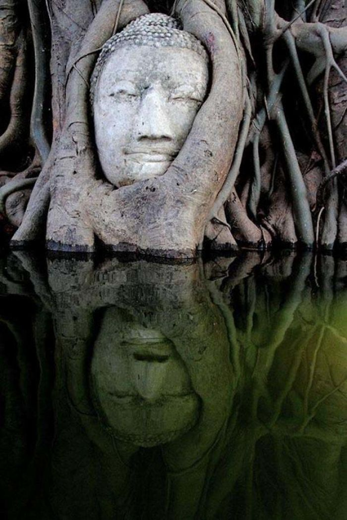 buddha engulfed in roots nature reclaiming taking over