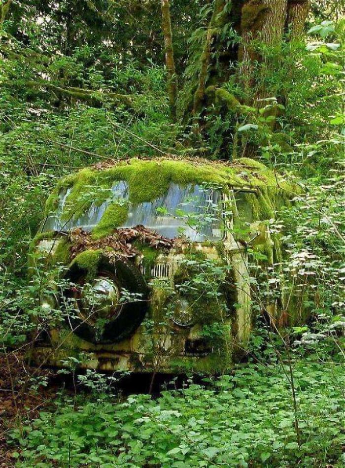 car forest nature reclaiming taking over