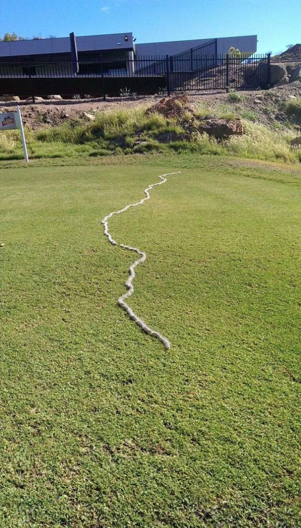 caterpillars marching scary animals in Australia