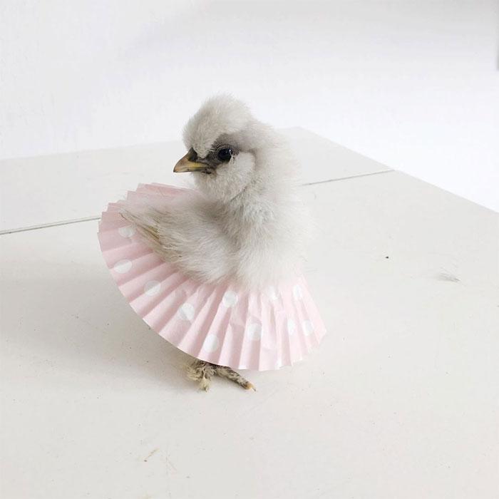 chick in cupcake tutu