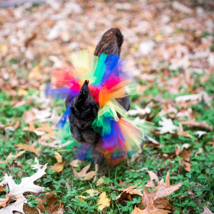 chicken ballerina in tutu