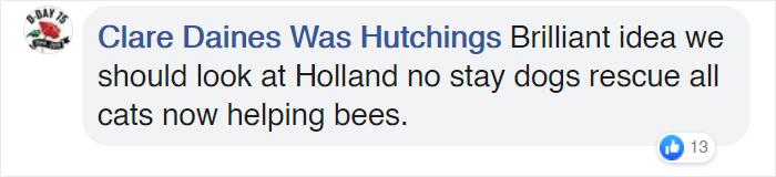 clare city in netherlands transforms bus stops into bee stops utrecht
