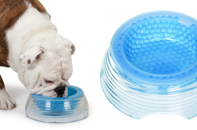 cooling dog bowl