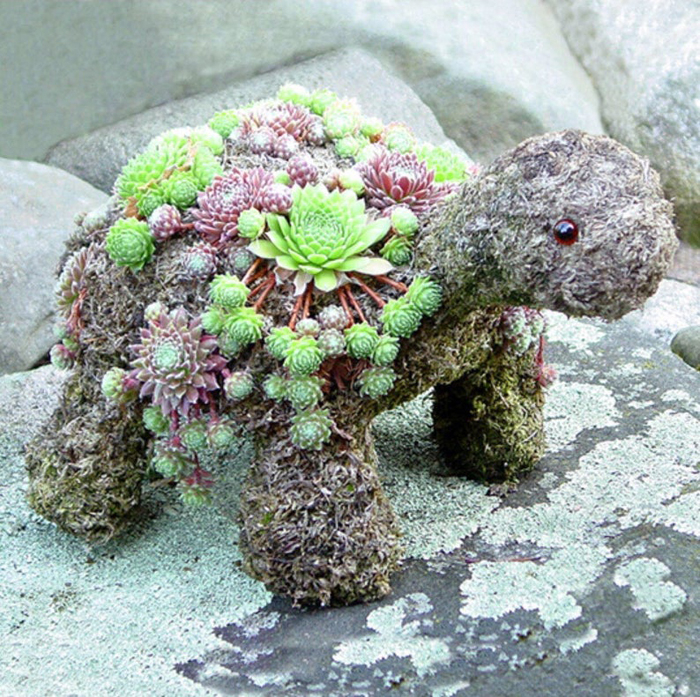 diy succulent turtle kit