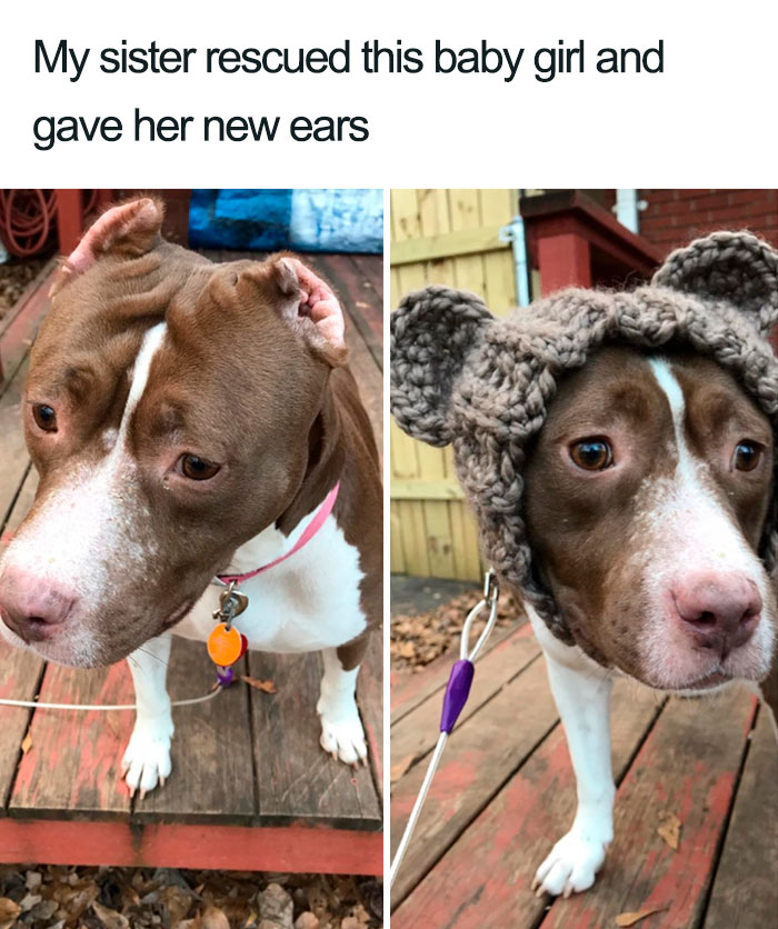 dog has new ears