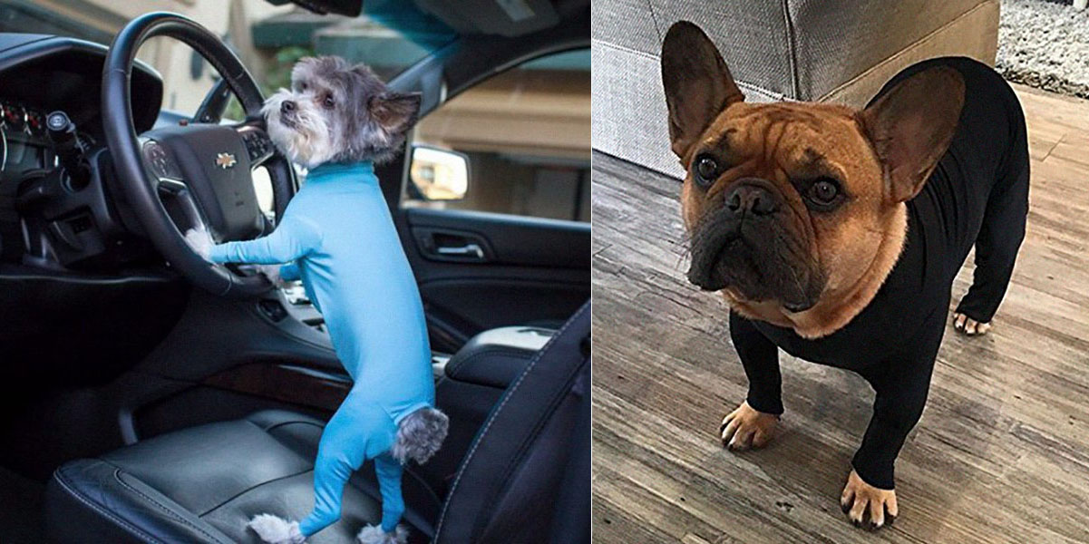 A Dog Onesie Exists Which Helps Shield Your House From