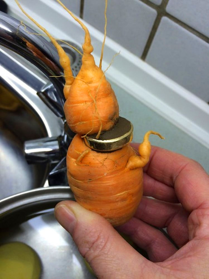 elderly man finds lost wedding ring on a carrot
