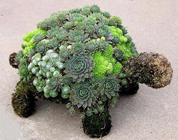 etsy diy succulent turtle kit