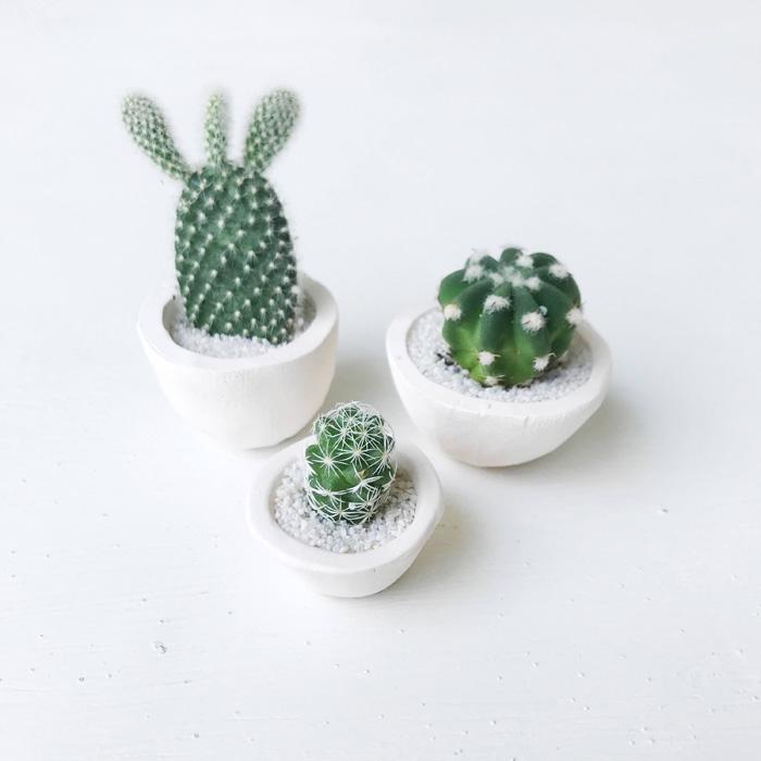 etsy micro cacti surprise bonsai cactus