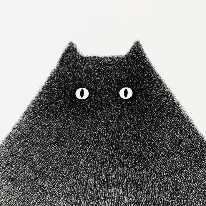 fluffy black cats ink drawings kamwei fong head detail