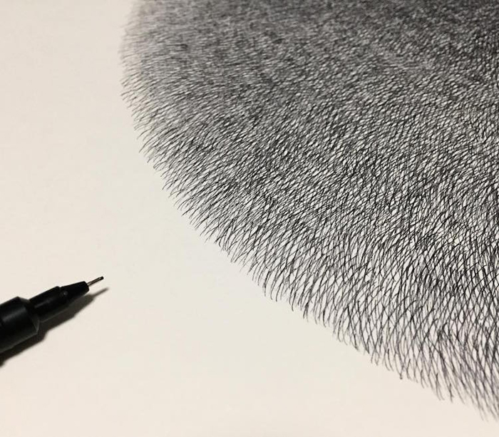 fluffy black cats ink drawings kamwei fong short thin lines