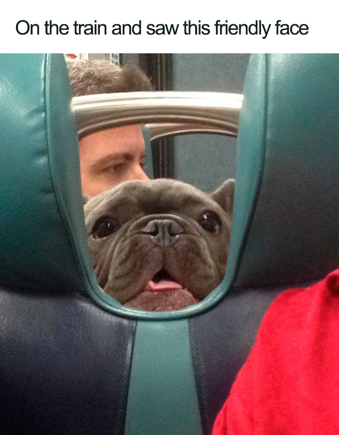 friendly dog on the train