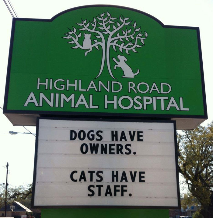 funny cat jokes vet clinic signs cats have staff