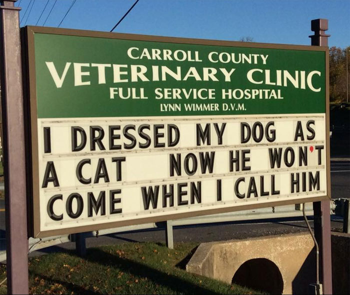 funny cat jokes vet clinic signs dog dressed as cat