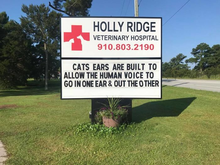 funny cat jokes vet clinic signs ear anatomy
