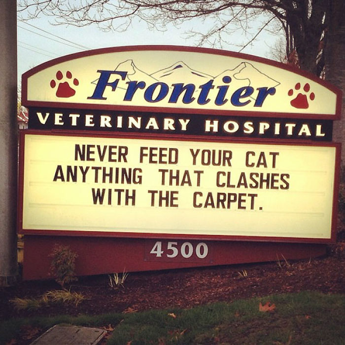 funny cat jokes vet clinic signs lashes with carpet