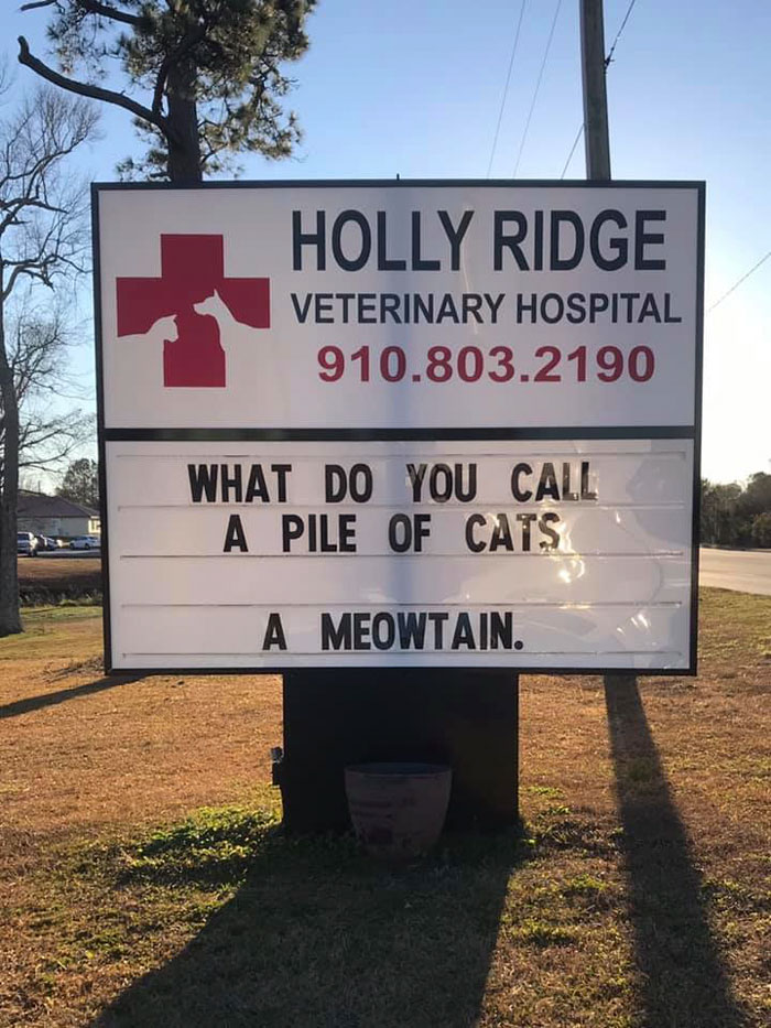 funny cat jokes vet clinic signs meowtain