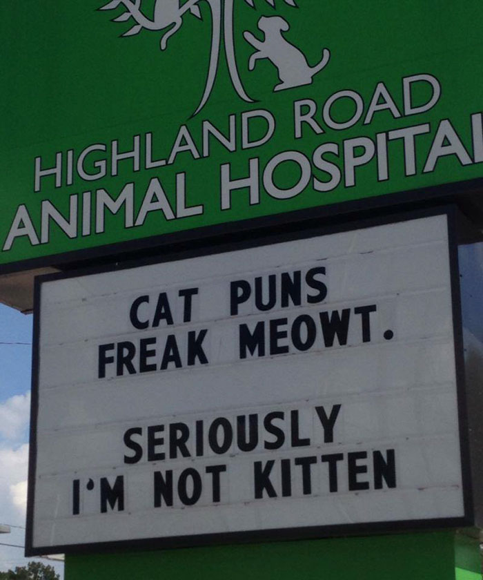 funny cat jokes vet clinic signs not kitten puns
