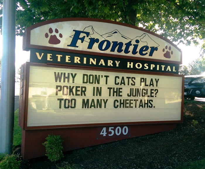funny cat jokes vet clinic signs poker cheetahs