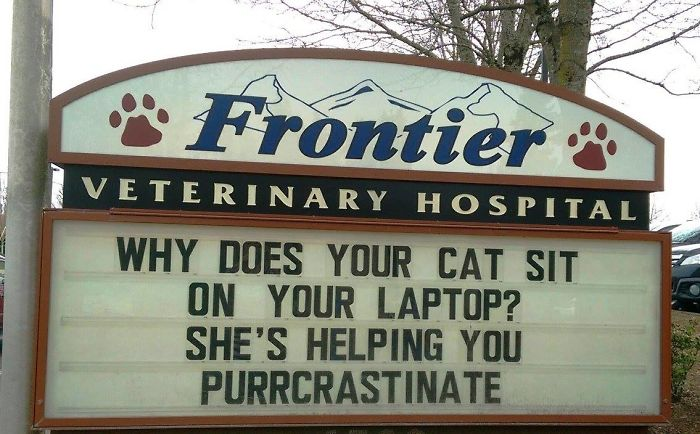 funny cat jokes vet clinic signs purrcrastinate