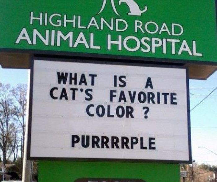 funny cat jokes vet clinic signs purrple