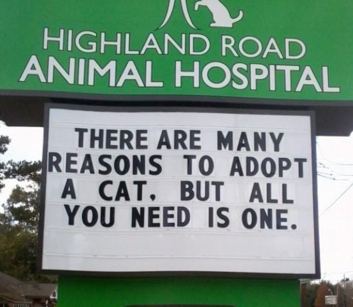 funny cat jokes vet clinic signs reasons to adopt