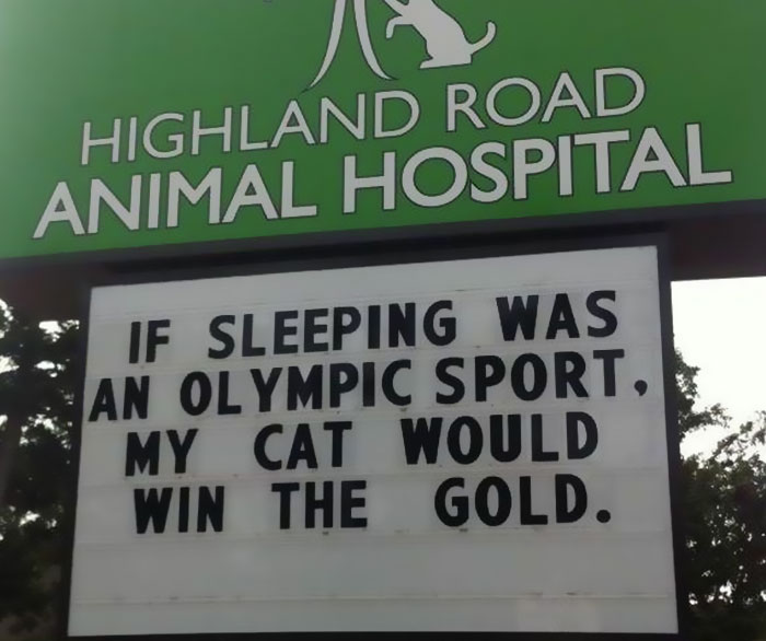funny cat jokes vet clinic signs sleeping olympics