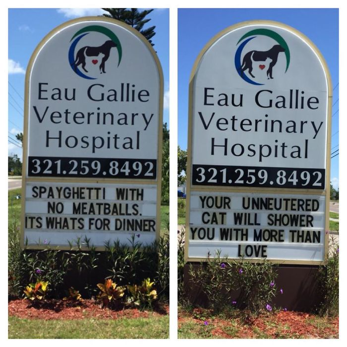 funny cat jokes vet clinic signs spayghetti