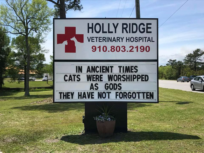 funny cat jokes vet clinic signs worshipped as gods