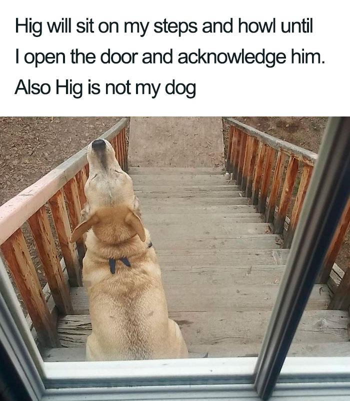 hig howling dog