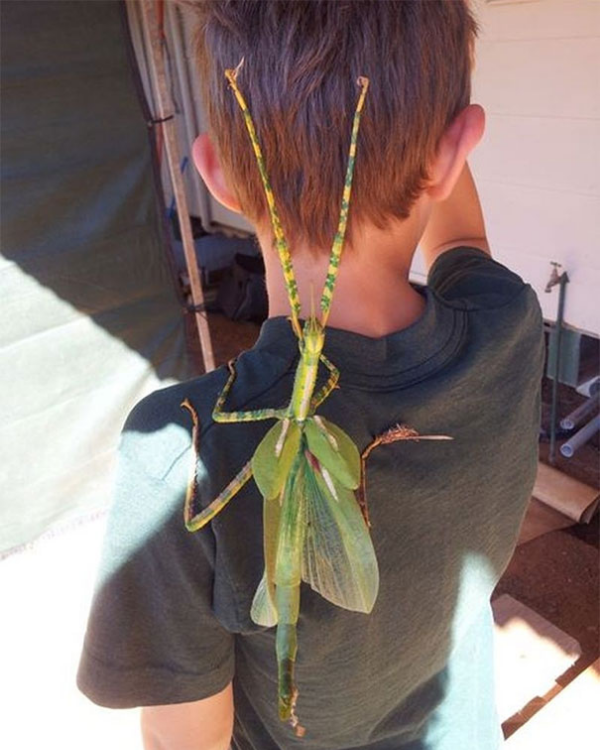 insect on a child's back scary animals in Australia