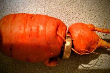 lost wedding ring found in carrot