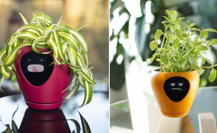 lua smart planter