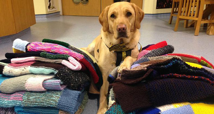 maisie green donates knitted blankets coats dogs trust