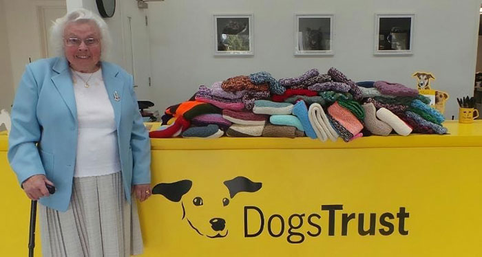 maisie green donates knitted blankets shelter dogs