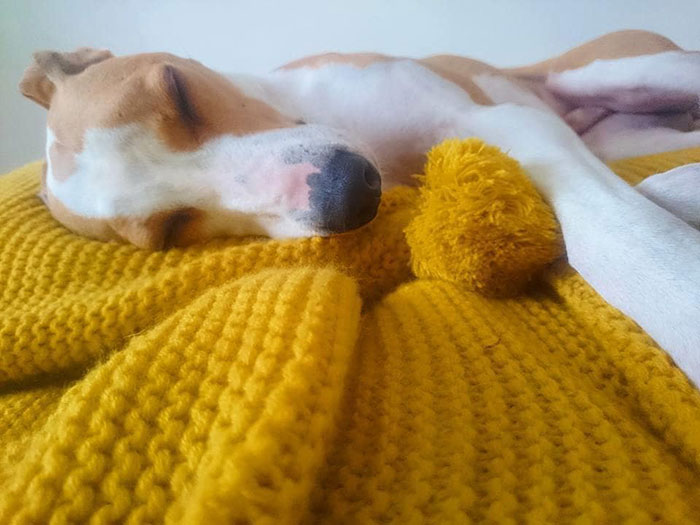 maisie green gives knitted blankets dogs trust