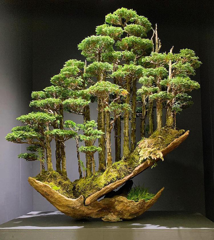 masahiko kimura bonsai master hinoki forest