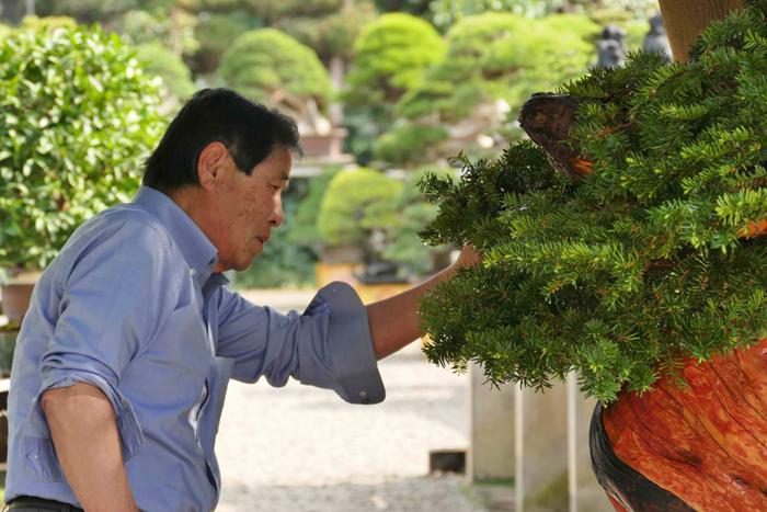 masahiko kimura bonsai master