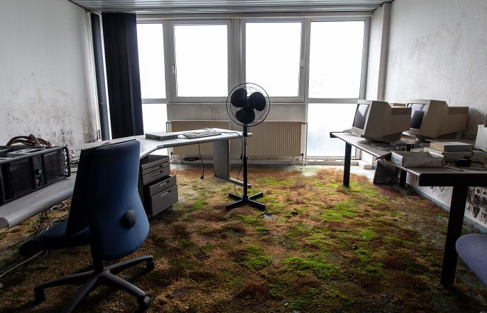 moss on office floor nature reclaiming taking over