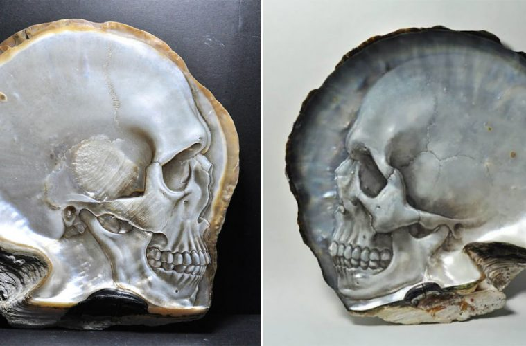 mother of pearl shells