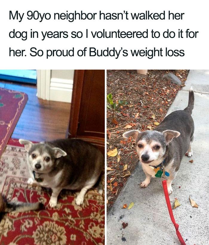 neighbor walks dog weight loss