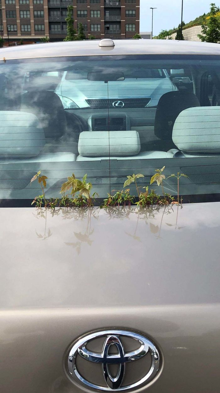 plants growing on a car nature reclaiming taking over