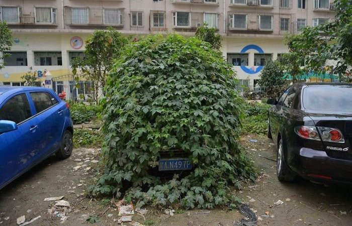 plants overpowering a car nature reclaiming taking over