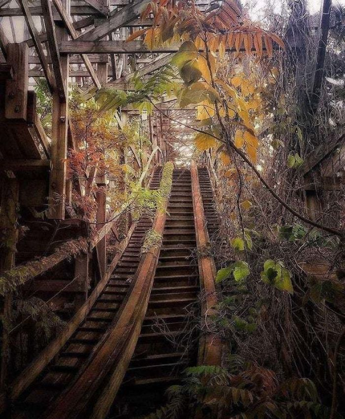 rails forested nature reclaiming taking over