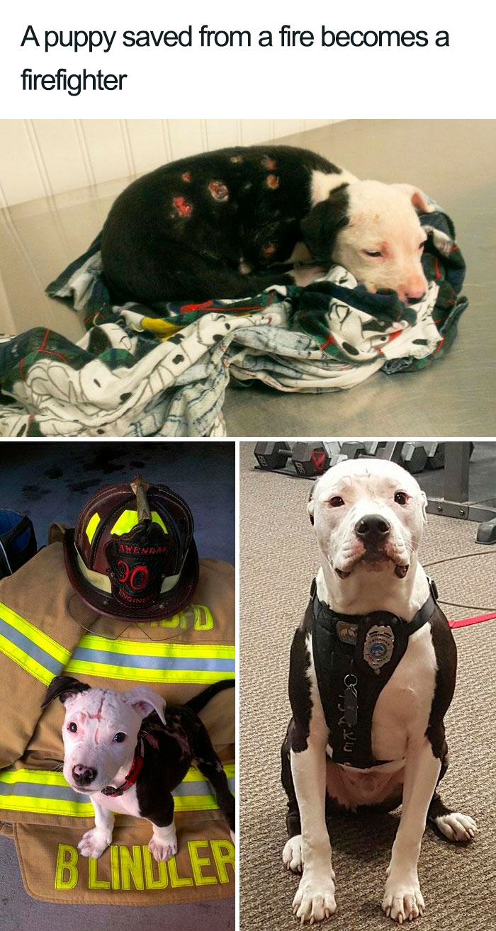 rescued puppy becomes firefighter