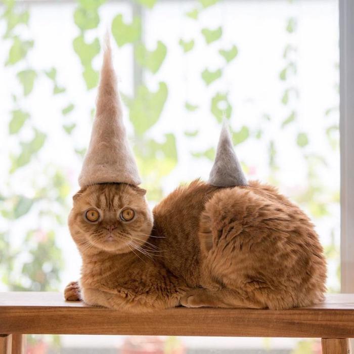 ryo yamazaki cat hair hats mugi dunce caps