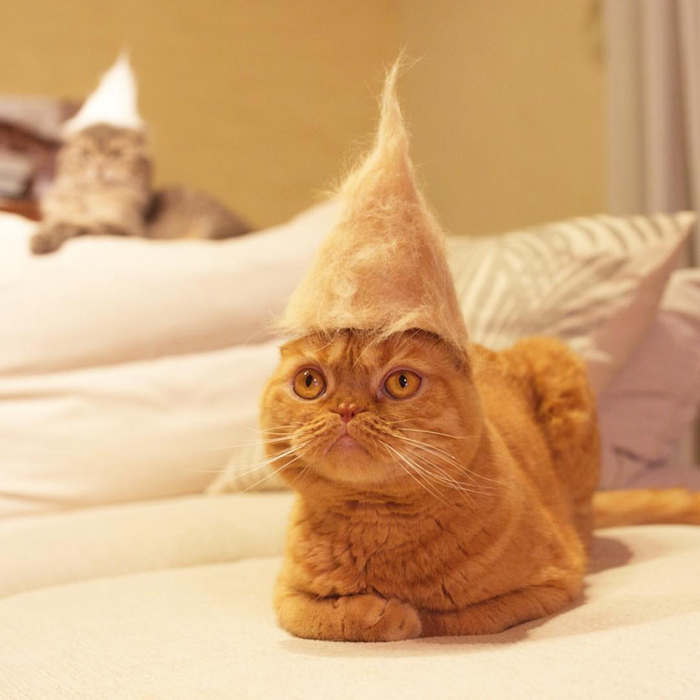 ryo yamazaki cat hair hats mugi pointed cap