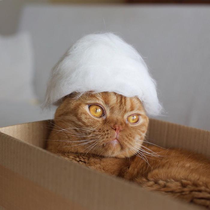 ryo yamazaki cat hair hats mugi white wig