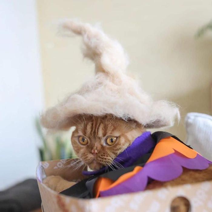 ryo yamazaki cat hair hats mugi witch hat
