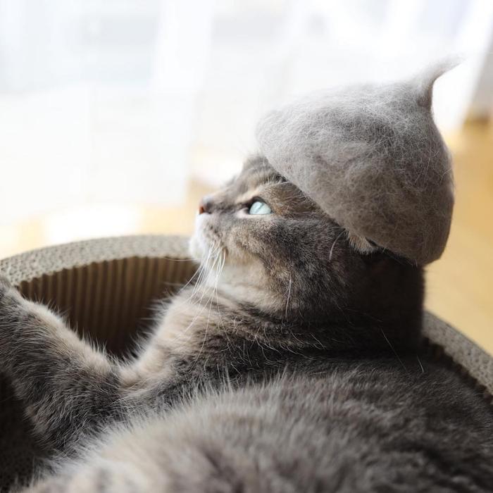 ryo yamazaki cat hair hats nya kisses cap